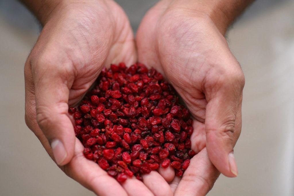 Горсть барбарисовых ягод