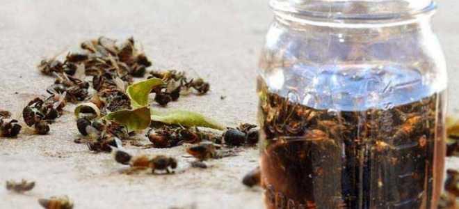 Применение настойки пчелиного подмора на водке