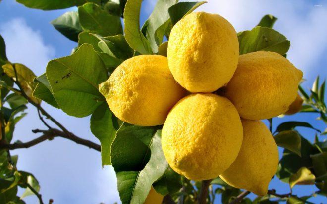 Подготовка лимонов