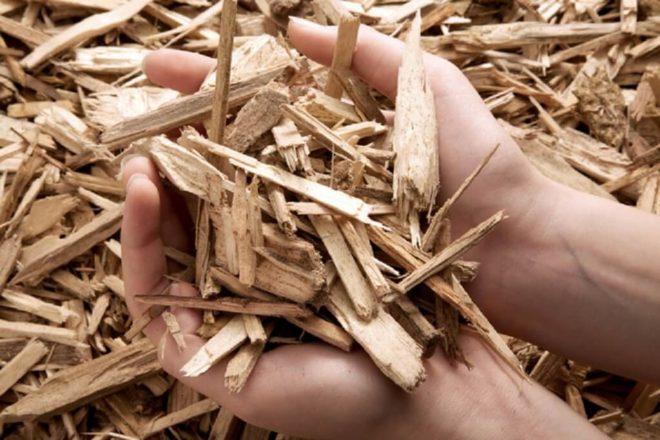 Польза настойки коры осины
