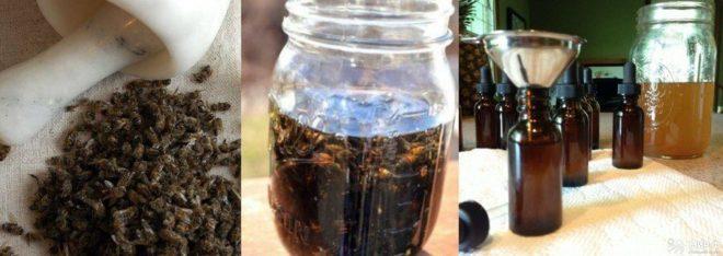Польза настойки из пчелиного подмора